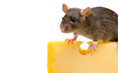 Rodent Control: Pest Control